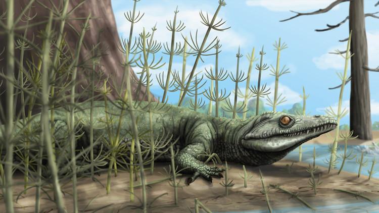 'Lagarto feroz': Descubren en Brasil una nueva especie que vivió antes de los dinosaurios
