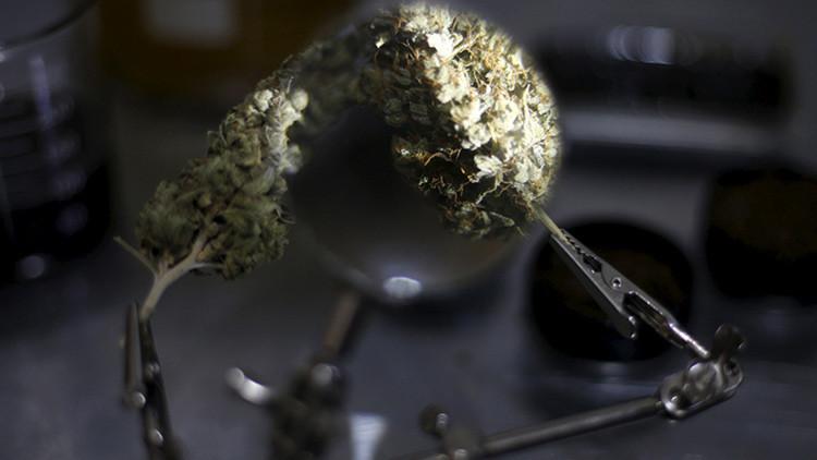 El efecto inesperado del cannabis en la arquitectura antigua