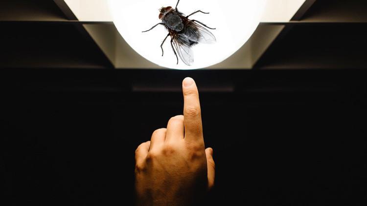 Diputado argentino vota a favor porque una mosca le hizo levantar la mano (Video)
