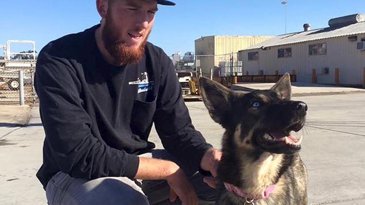 Historia conmovedora: una cachorra que cayó al mar aparece cinco semanas después en una isla