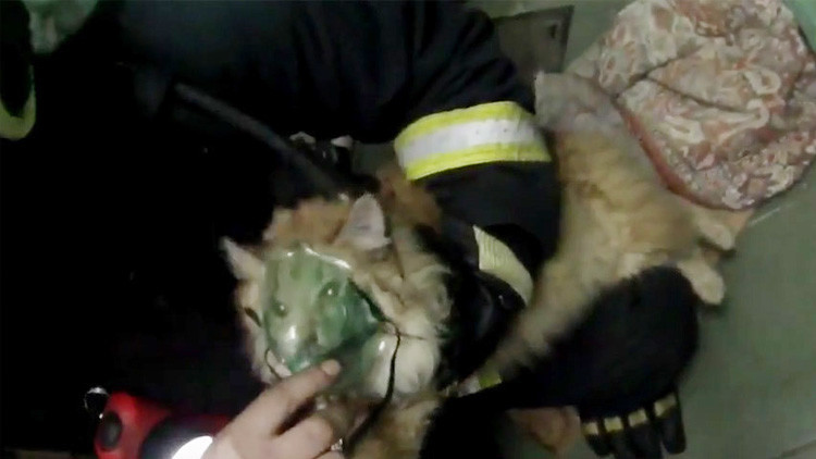 Video: Bomberos rusos salvan a una gata moribunda con una máscara de oxigeno