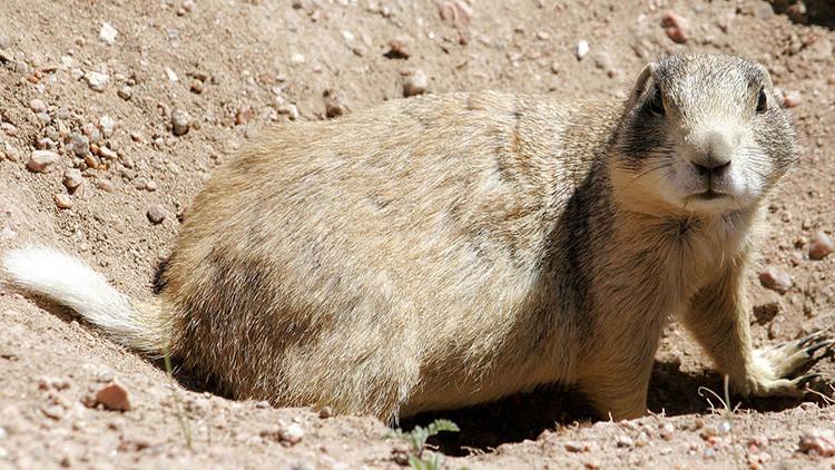 Biólogos logran 'desenmascarar' al primer asesino en serie entre mamíferos herbívoros
