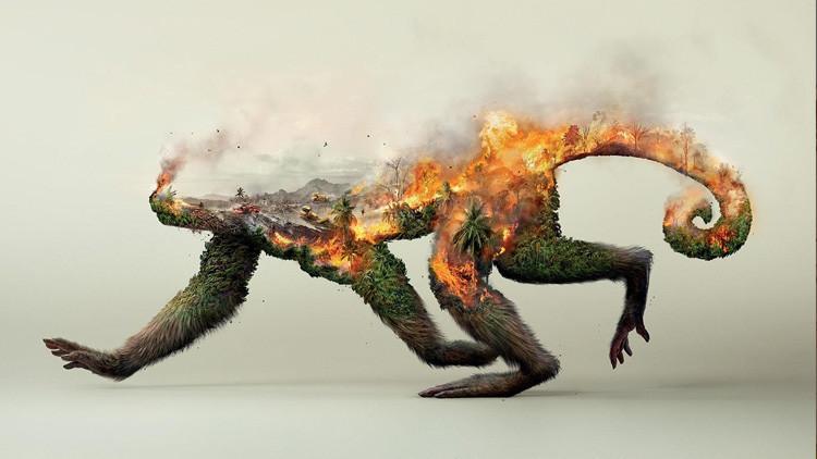 Impactantes imágenes de cómo la actividad humana destruye la vida de los animales