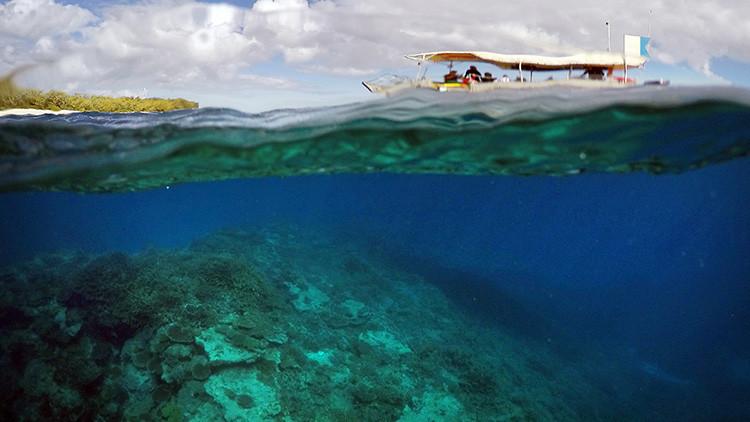 La Gran Barrera de Coral se muere en silencio (video)