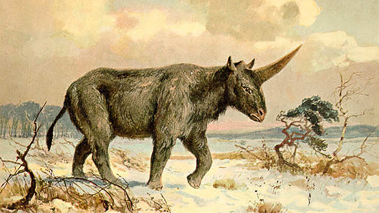Hallan los restos de un verdadero unicornio que habría vivido entre los humanos