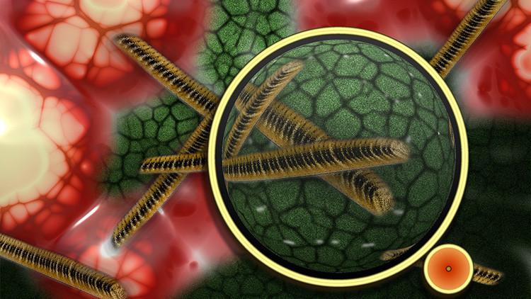 ¿Más cerca de la cura del cáncer?: Los científicos resuelven la incógnita de los 'tumores-vampiro'