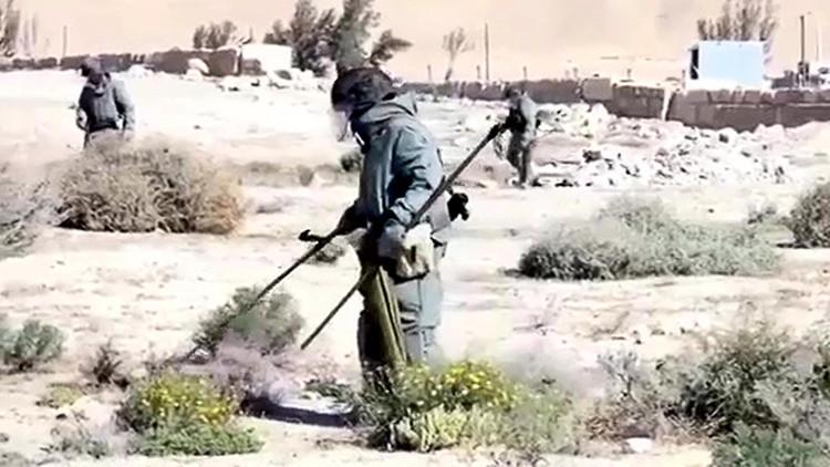 Zapadores rusos desactivan en Palmira 3.000 minas en 12 días