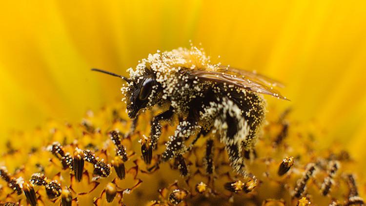 Fin del holocausto de las abejas: una empresa de EE.UU. retira sus productos con un químico mortal