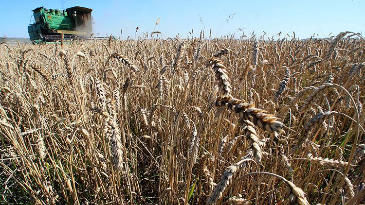 Estados Unidos pierde la 'guerra del trigo' con Rusia