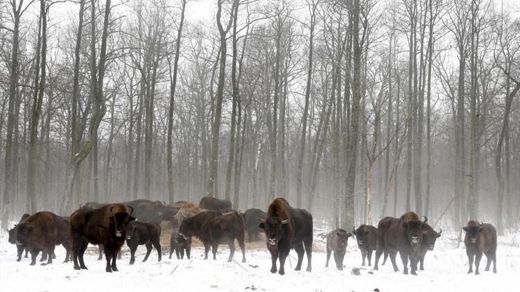 La vida silvestre de Chernóbil: un constante florecer sin humanos en la zona de exclusión
