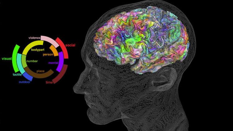 Crean un atlas semántico del cerebro que permite leer la mente (VIDEO)