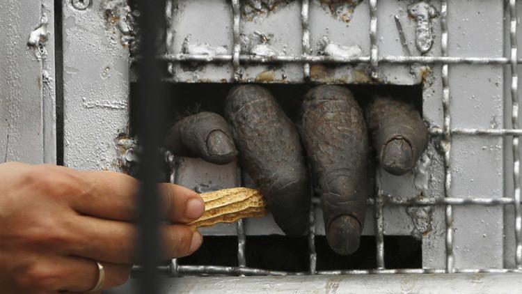 Los 7 intentos más extraños de traficar con animales en extinción (FOTOS)