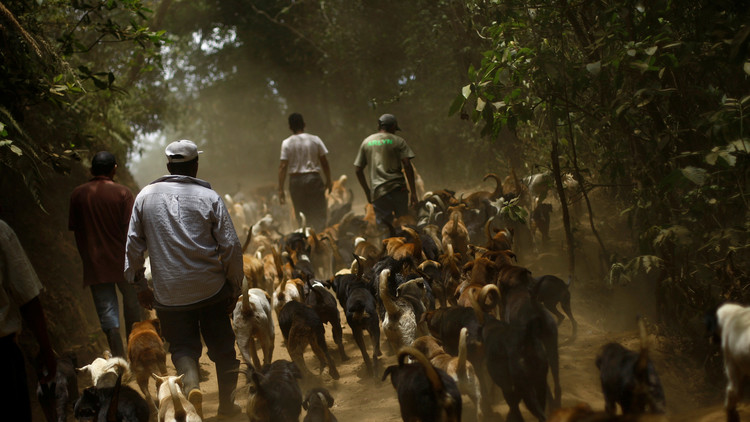 'Todos los perros van al cielo': el paraíso de los perros está en Costa Rica (fotos, video)