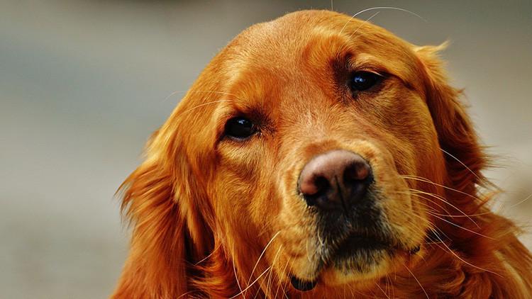 Cariño canino: Los perros comparten el mismo ritmo cardíaco de sus dueños