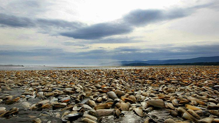Miles de toneladas de peces muertos inundan las playas chilenas