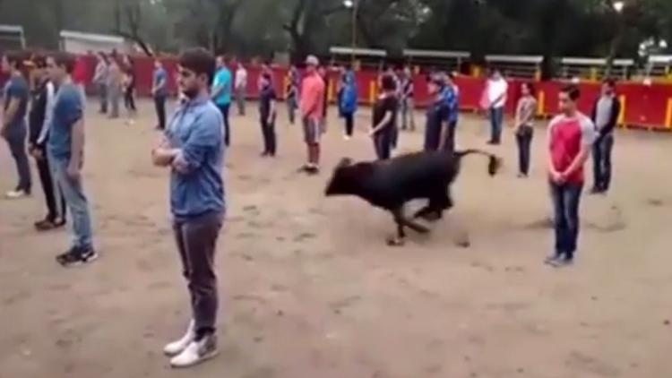 Video impactante: Un toro salta a una plaza llena de gente y… se limita a buscar una salida