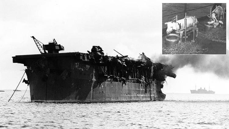 Hallan un buque de EE.UU. que mataba animales con bombas atómicas
