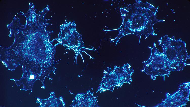 Descubren un método para luchar contra el cáncer que podría prescindir de la quimioterapia
