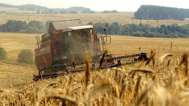 Rusia empezará a suministrar trigo a China