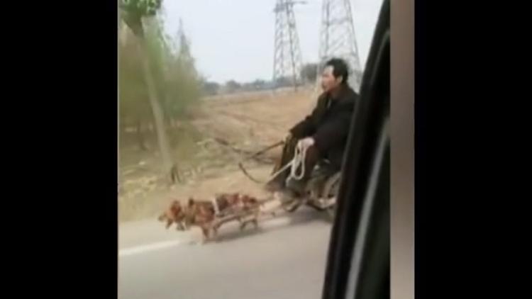 Crueldad contra los animales: un chino va en un carro tirado por su pequeña mascota