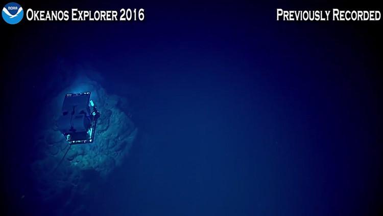 Video desde el lugar más profundo del océano: Así es la Fosa de las Marianas