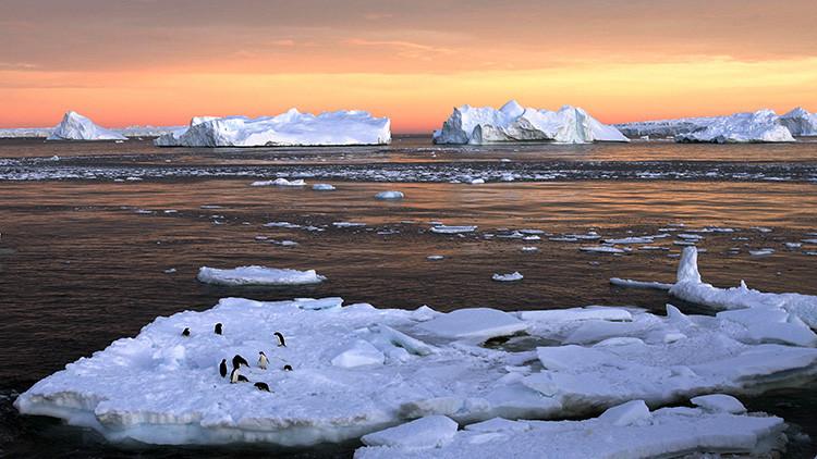 Descubren 'monstruos prehistóricos' en una expedición en la Antártida