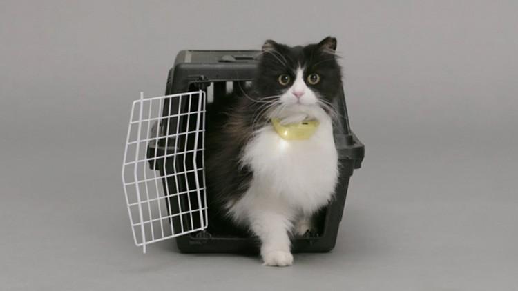 ¿Qué le dice su gato? El collar que traduce los maullidos de su felino