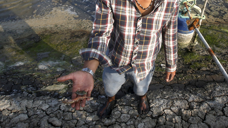 La aparición de abundantes peces muertos complica las elecciones en Vietnam