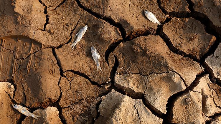 """""""Avanza más rápido de lo previsto"""": Transformaciones ambientales en Latinoamérica"""