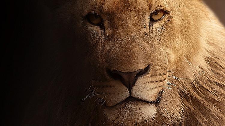 Video: Un joven chileno intenta suicidarse y se lanza a la jaula de los leones en un zoológico