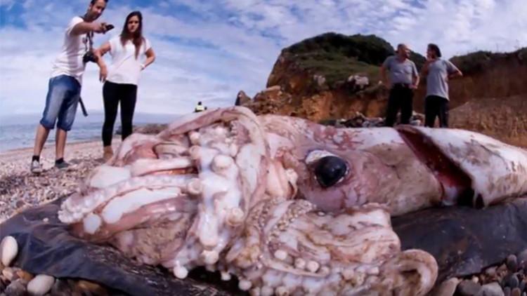 Las profundidades del océano esconden calamares tamaño autobús