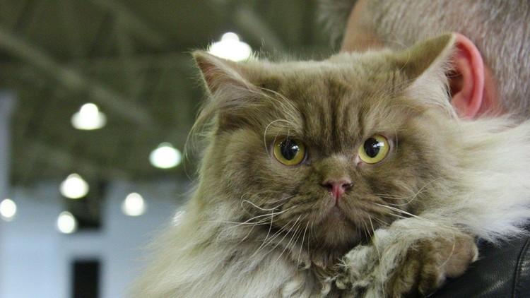 Un clérigo saudita prohíbe las selfis con gatos
