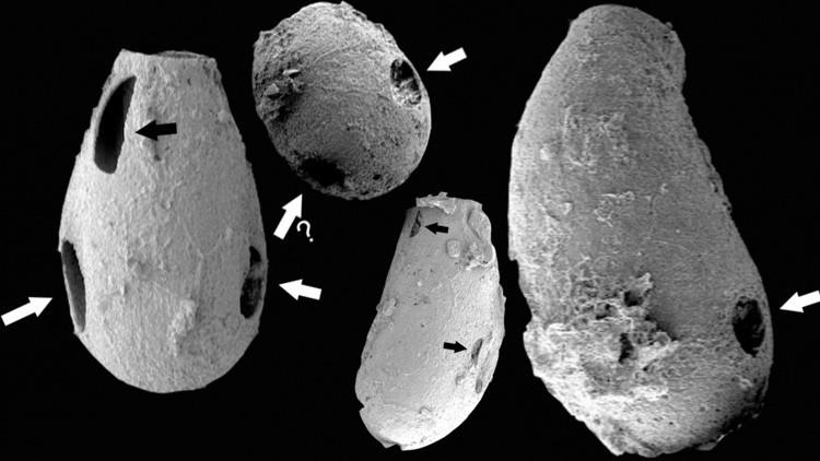 Científicos: Pequeños 'vampiros' habitaban la Tierra hace 550 millones de años