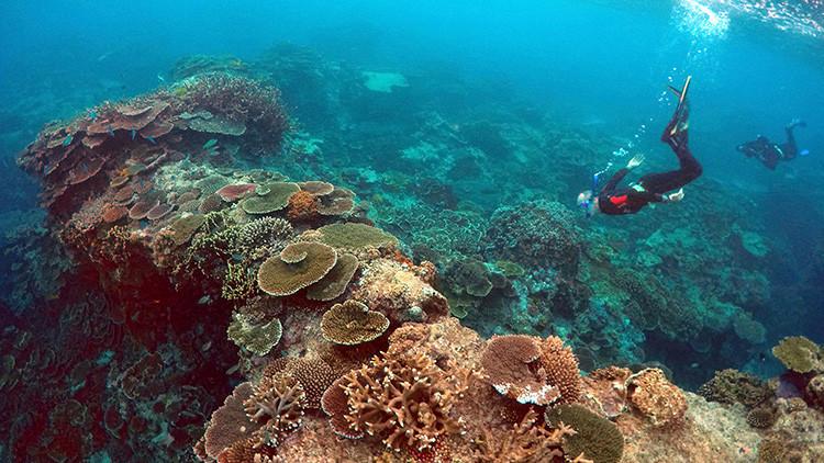 Una mala sorpresa: Conozca la amenaza que se cierne sobre el mayor arrecife de coral del mundo