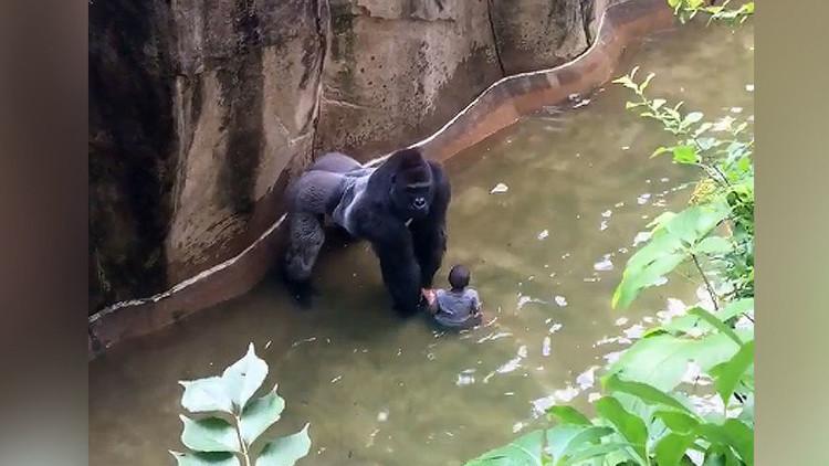 """""""Los accidentes pasan"""": La justificación de la madre del niño que cayó al foso del gorila en EE.UU."""