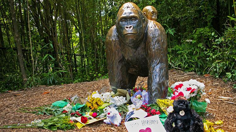 """El director del zoológico que mató a un gorila para salvar a un niño """"volvería a hacerlo"""""""
