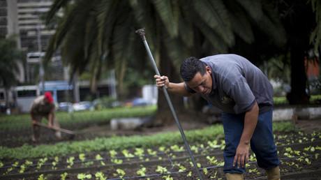 """Agricultores urbanos trabajan en el huerto organopónico """"Bolívar 1"""" en Caracas 24 de febrero de 2011."""