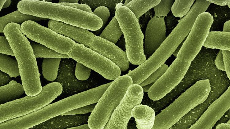 Inmortal: descubren una bacteria resistente a todo tipo de medicación