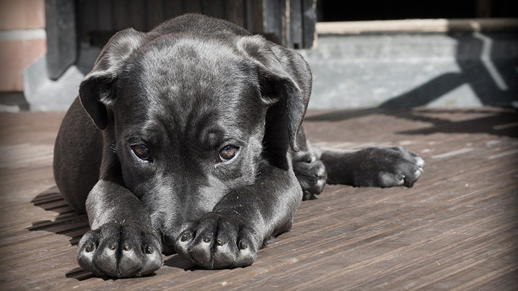 Científicos sugieren que la domesticación de los perros no surgió en un solo continente