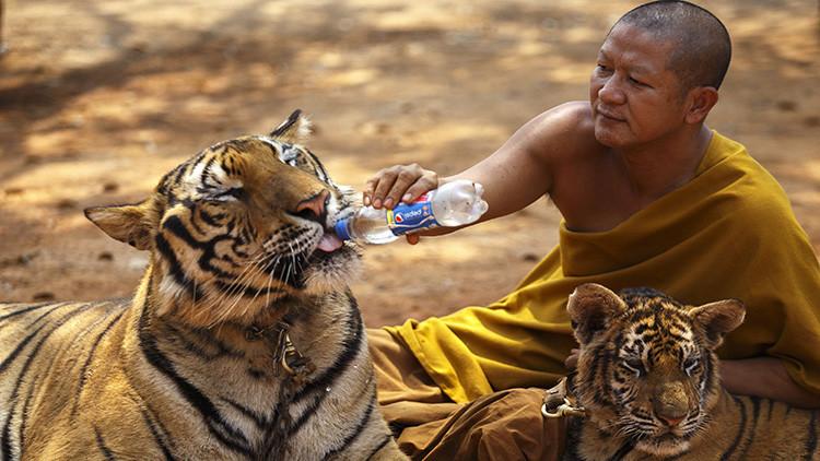 La 'cámara de los horrores' del Templo del Tigre, punta del iceberg del pujante tráfico de animales
