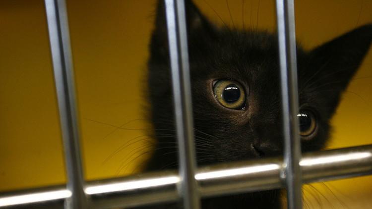 Base naval estadounidense en España, acusada de la 'desaparición' de gatos