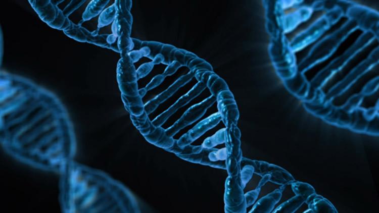 Hallan una secuencia en el genoma relacionada con un buen trabajo y sueldo