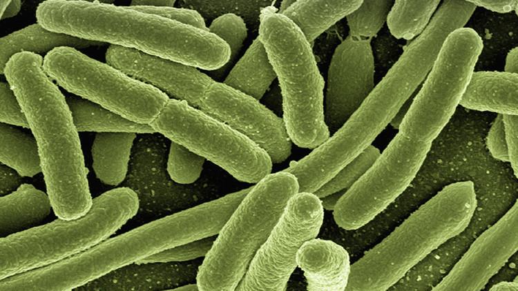 Hallan un supermicrobio que puede acabar con los antibióticos ¿Por qué deberíamos tenerle miedo?