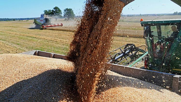 Bloomberg: Rusia exporta más alimentos que armas