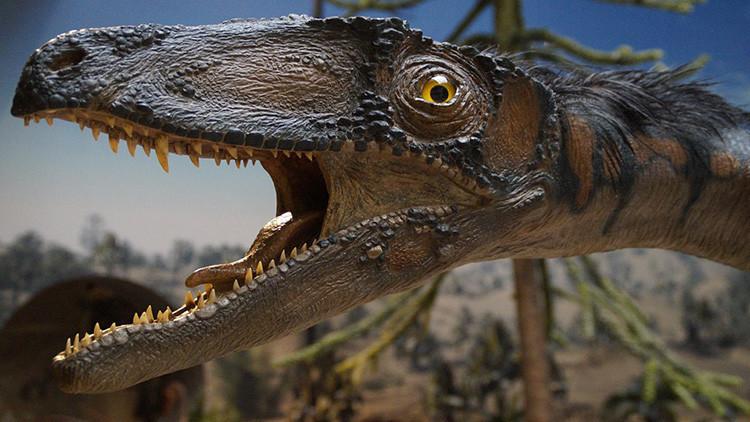 Descubren en la India huellas de dinosaurios de 150 millones de años