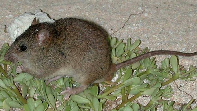 El cambio climático se cobra su primera víctima entre los mamíferos