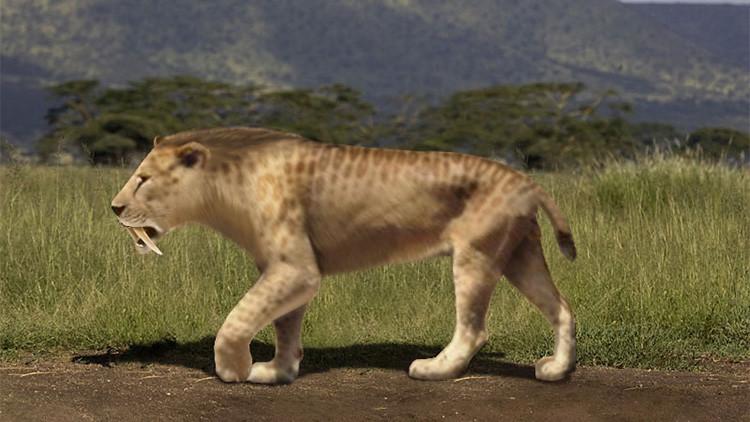 Hallan en Argentina huellas nunca vistas de un tigre prehistórico