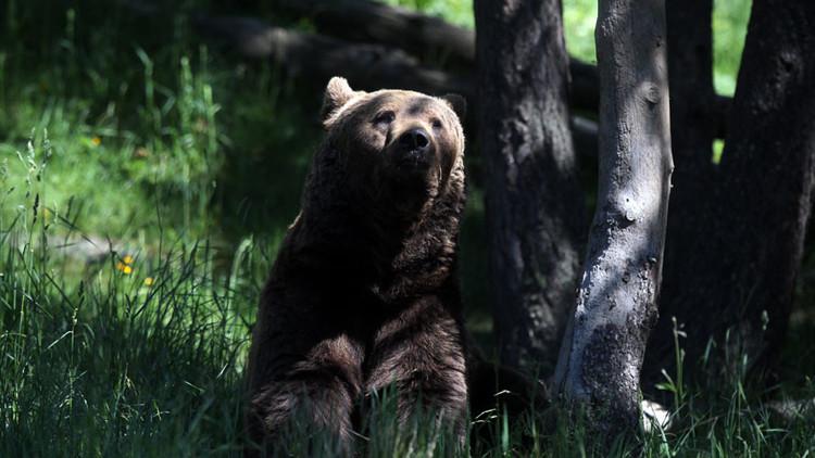 Una rusa da a luz en un bosque rodeado de osos
