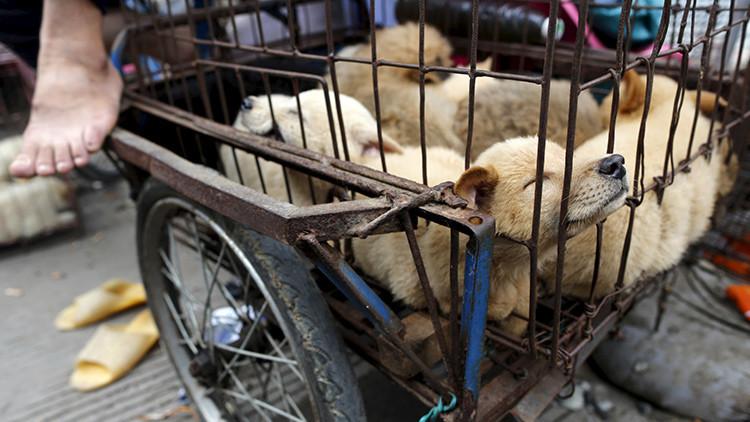 China: El festival de carne de perro de Yulin genera polémica por su crueldad (FUERTE VIDEO)