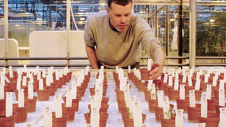 Científicos obtienen grandes cosechas de verduras comestibles cultivadas en suelo 'marciano'